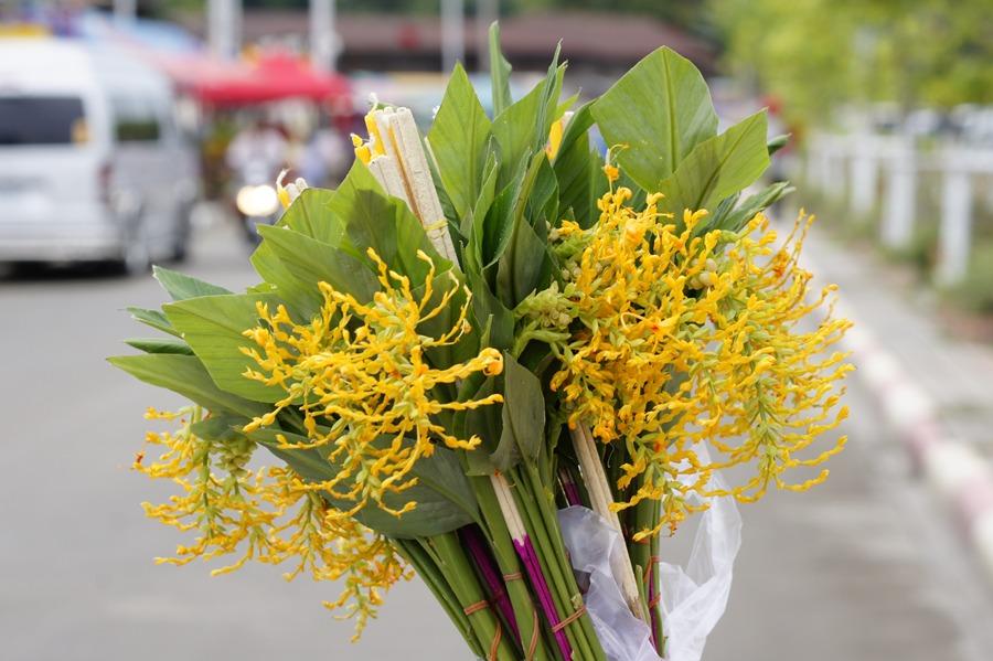 ดอกเข้าพรรษา สีเหลือง